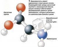 Аминокислоты имеют одинаковую структурную основу