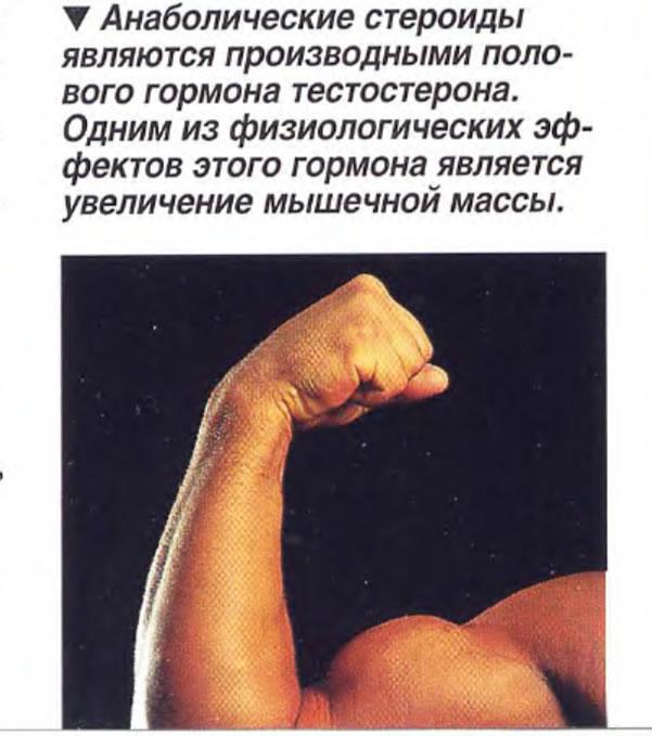 Анаболические стероиды являются производными полового гормона тестостерона