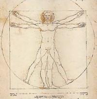 Анатомия - это изучение формы и строения тела человека. Происходит от греческого «рассекать»