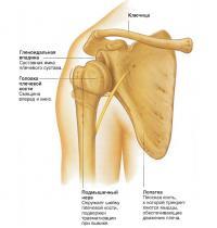 Анатомия вывихнутого сустава
