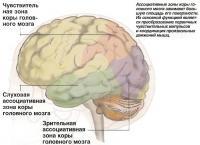 Ассоциативные зоны коры головного мозга