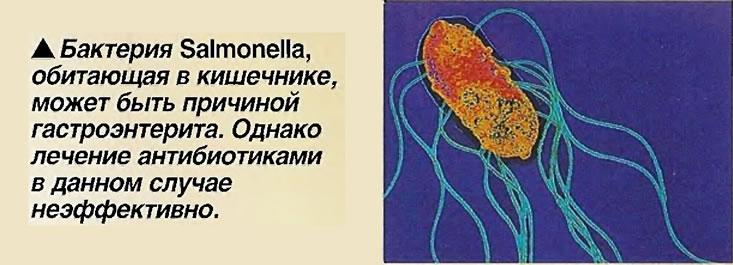 Бактерия Salmonella