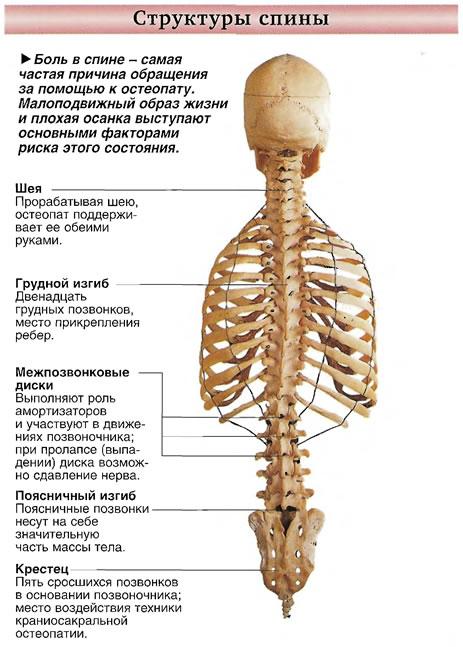Боль в спине - самая частая причина обращения за помощью к остеопату