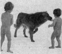Босые дети на снегу с собакой