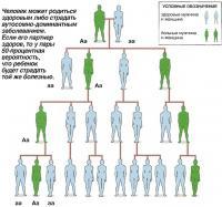 Человек может родиться здоровым либо страдать аутосомно-доминантным заболеванием