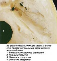Четыре главных отверстия правой латеральной части средней черепной ямки