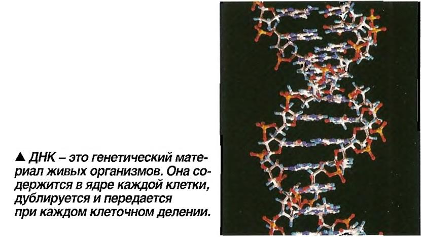 ДНК - это генетический материал живых организмов
