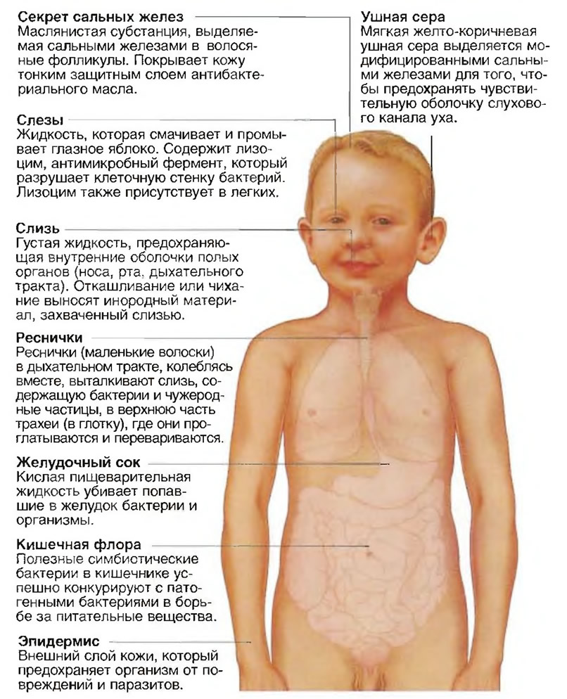 Физическая иммунная защита