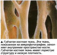 Губчатая костная ткань