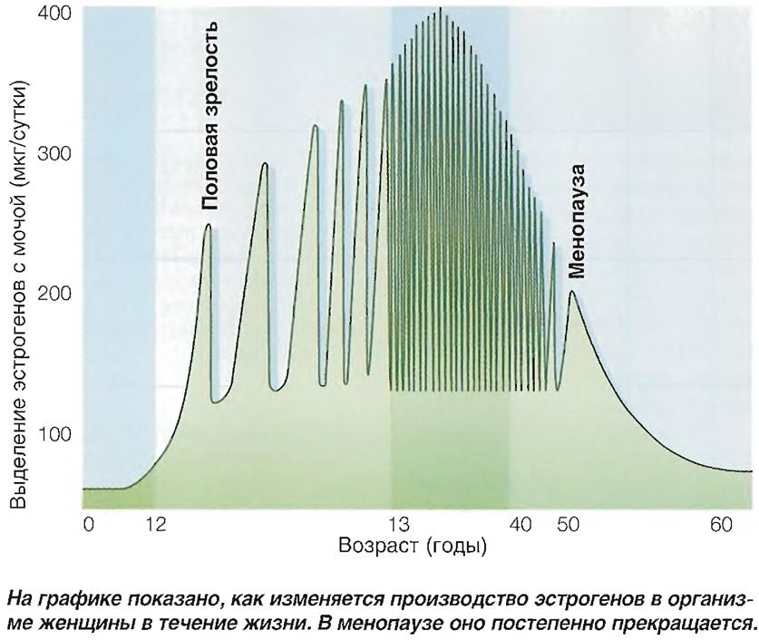 Изменяемость производства эстрогенов в течение жизни