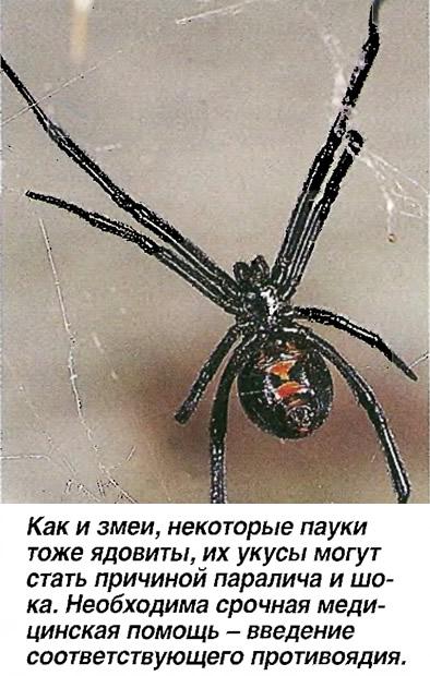 Как и змеи, некоторые пауки тоже ядовиты