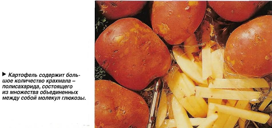 Картофель содержит большое количество крахмала - полисахарида