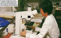 Каждое предметное стекло с мазком из шейки матки исследуется под микроскопом