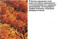 Клетки наружного слоя кожи постоянно обновляются и отшелушиваются в процессе десквамации