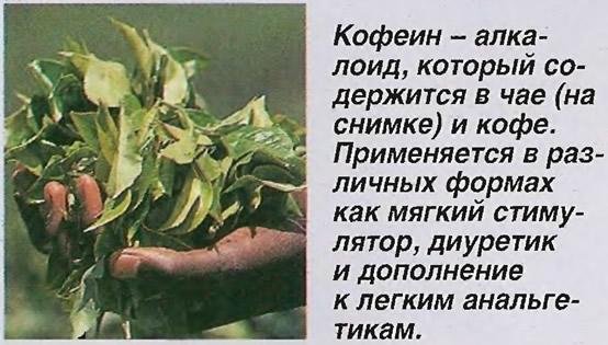Кофеин - алкалоид, который содержится в чае и кофе