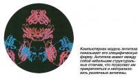 Компьютерная модель антитела показывает его специфическую форму