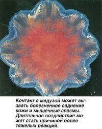 Контакт с медузой может вызвать болезненное саднение кожи и мышечные спазмы