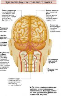 Кровоснабжение головного мозга