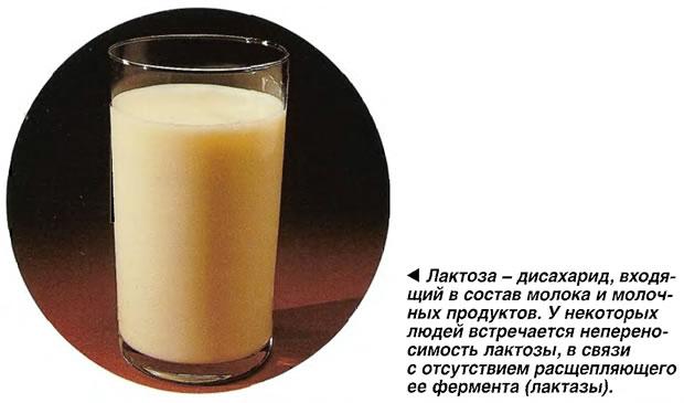 Лактоза - дисахарид, входящий в состав молока и молочных продуктов