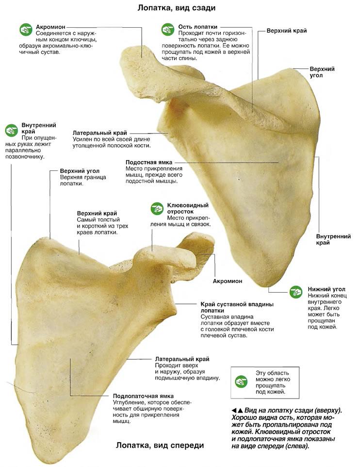 Артрит височно нижнечелюстного сустава лечение народными средствами