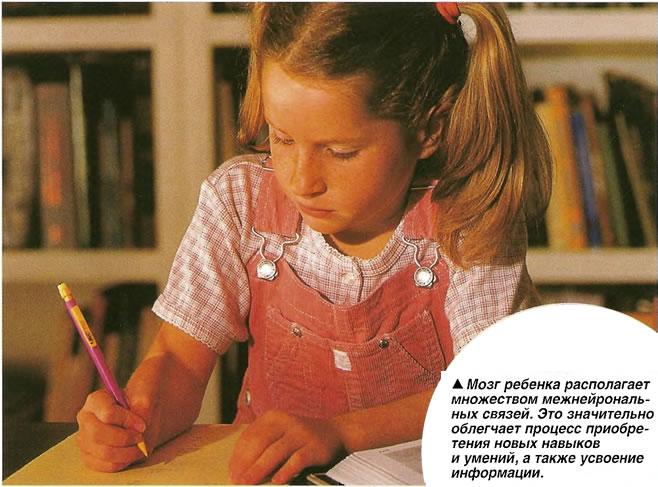 Мозг ребенка располагает множеством межнейрональных связей