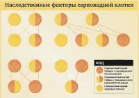 Наследственные факторы серповидной клетки