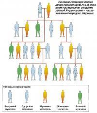 Необычный механизм наследования синдрома ломкой Х-хромосомы