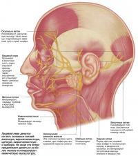 Нервы лица
