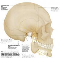 Нижнечелюстной нерв иннервирует жевательные мышцы