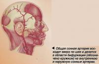 Общая сонная артерия