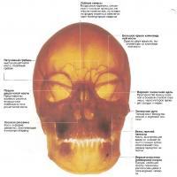 Освещенный череп