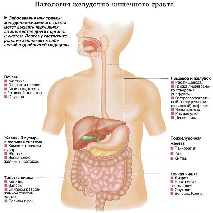 Патология желудочно-кишечного тракта
