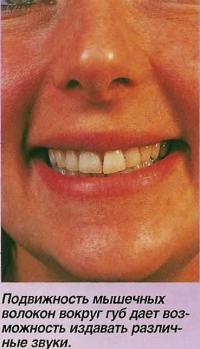 Подвижность мышечных волокон вокруг губ