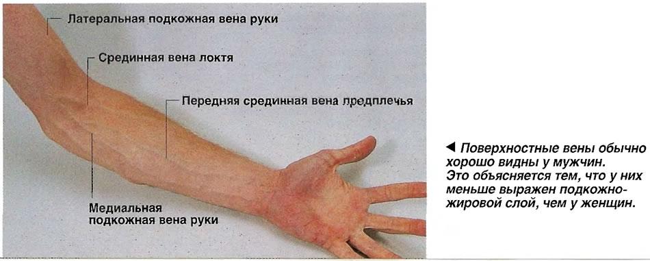 Поверхностные вены обычно хорошо видны у мужчин