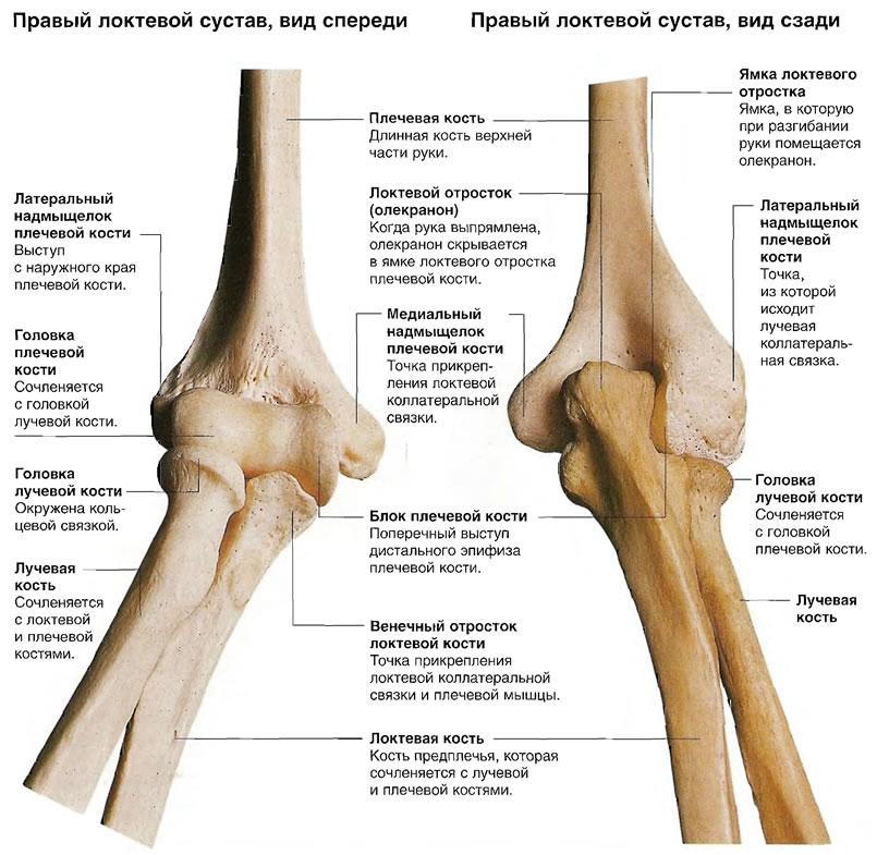 Биоэнергетика правого локтя суставы чем лечить коленные суставы на ногах
