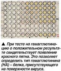 При тесте на гемагглютина-цию о положительном результате свидетельствует появление красного пятна