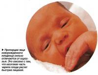 Пропорции лица новорожденного младенца сильно отличаются от взрослых