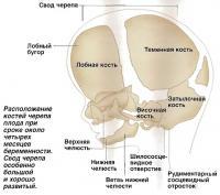 Расположение костей черепа плода при сроке около четырех месяцев беременности