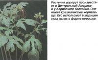 Растение аррорут произрастает в Центральной Америке и у Карибского бассейна