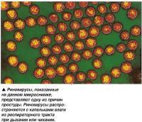 Риновирусы, показанные на данном микроснимке, представляют одну из причин простуды