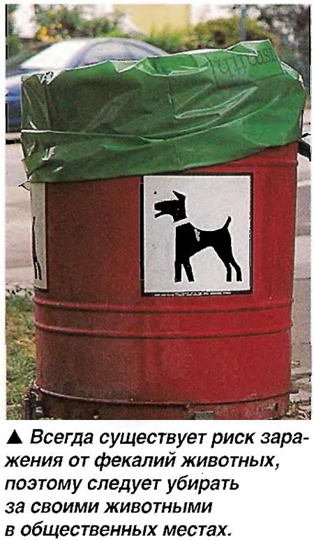Риск заражения от фекалий животных