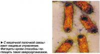С кишечной палочкой связывают пищевые отравления