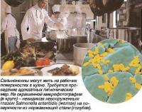 Сальмонеллы могут жить на рабочих поверхностях в кухне