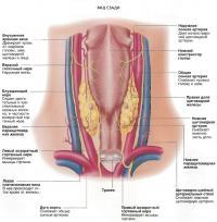 Щитовидная железа. Вид сзади