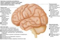 Симптомы эпилепсии разнообразны
