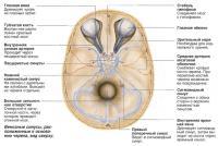 Синусы основания черепа