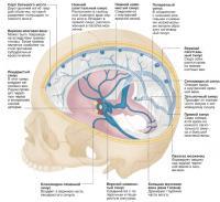 Синусы верхней части черепа