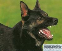 Собаки могут вести себя непредсказуемо, особенно если рядом маленькие дети