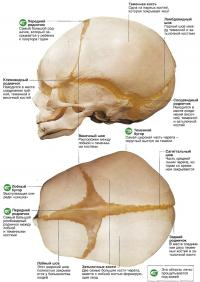 Соединения костей черепа ребенка