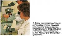 Стрептококки и стафилококки считаются грамположительными, так как они впитывают краситель.
